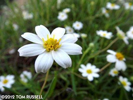 Magic Camera Monday: Enchanted Garden 11